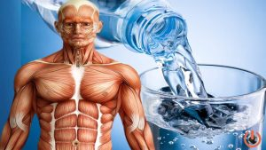 İnsan vücudunda su oranı nedir