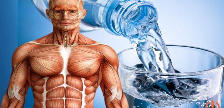 İnsan bedenindeki su oranı ile ilgili görsel sonucu
